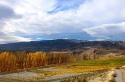 Vineyard in Lake Otago