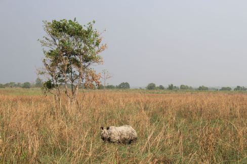 Rhino in the Open Plains